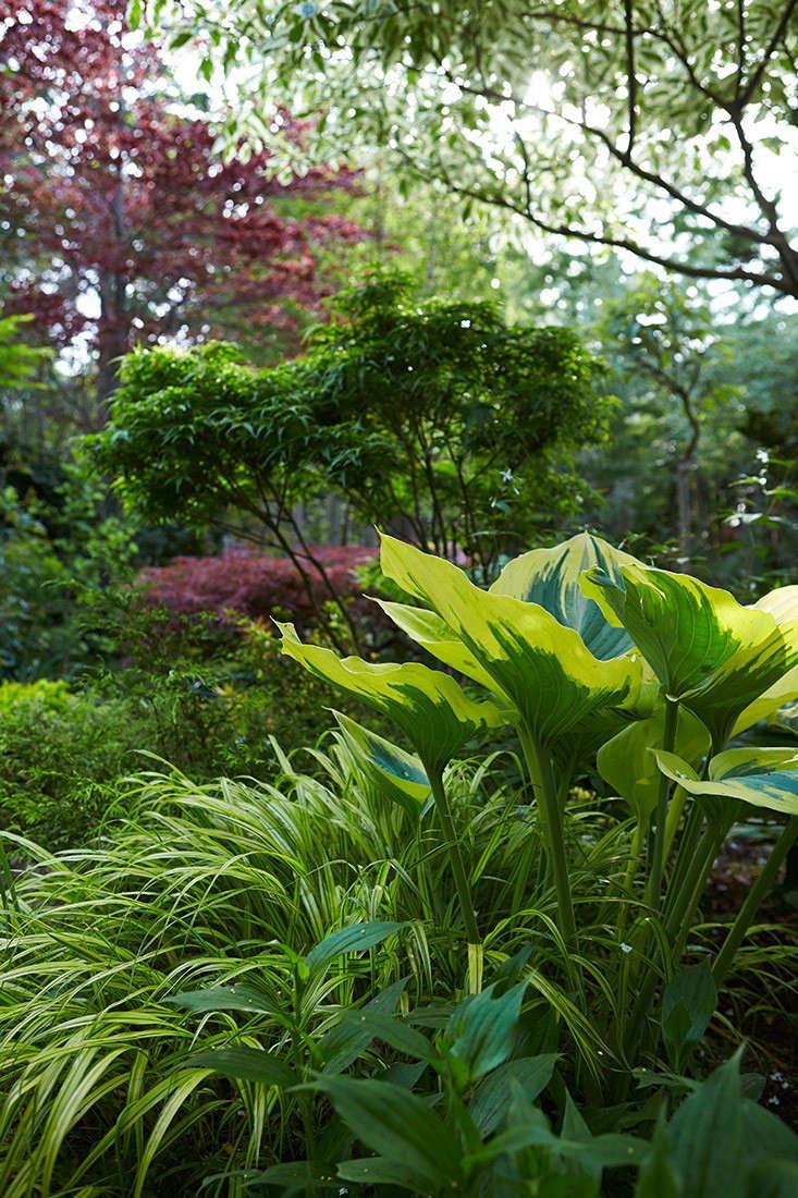 variegated-hostas-liriope-marjorie-harris-garden-toronto-gardenista