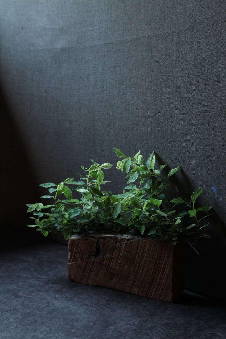 variegated-plants-4-maria-robledo-gardenista