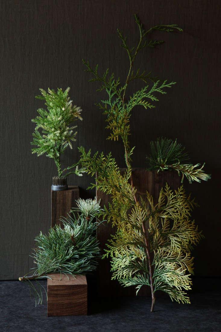 variegated-plants-7-maria-robledo-gardenista