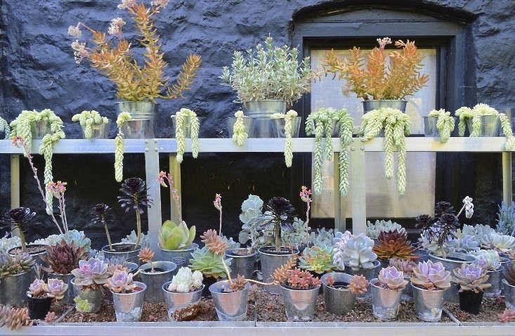 veddw-wales9-gardenista