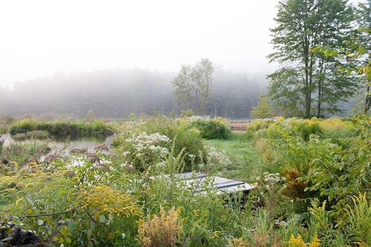 vermont-garden-wildflowers-at-pond-edge-gardenista
