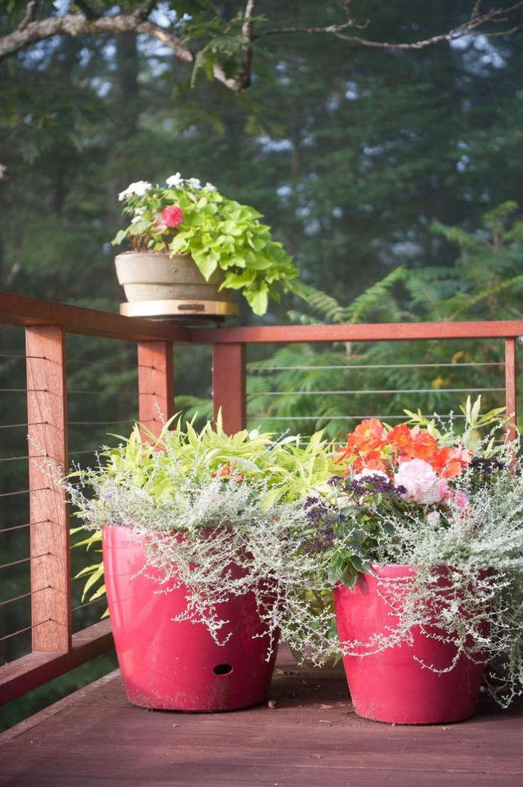 veront-garden-deck-red-planter-pots-potato-vine-gardenista