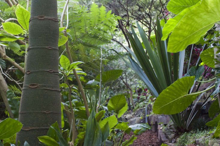 Artist Wendy Whiteley rescued a run-down plot of railroad land in Sydney and turned it into a tropical paradise. For more, see Wendy&#8