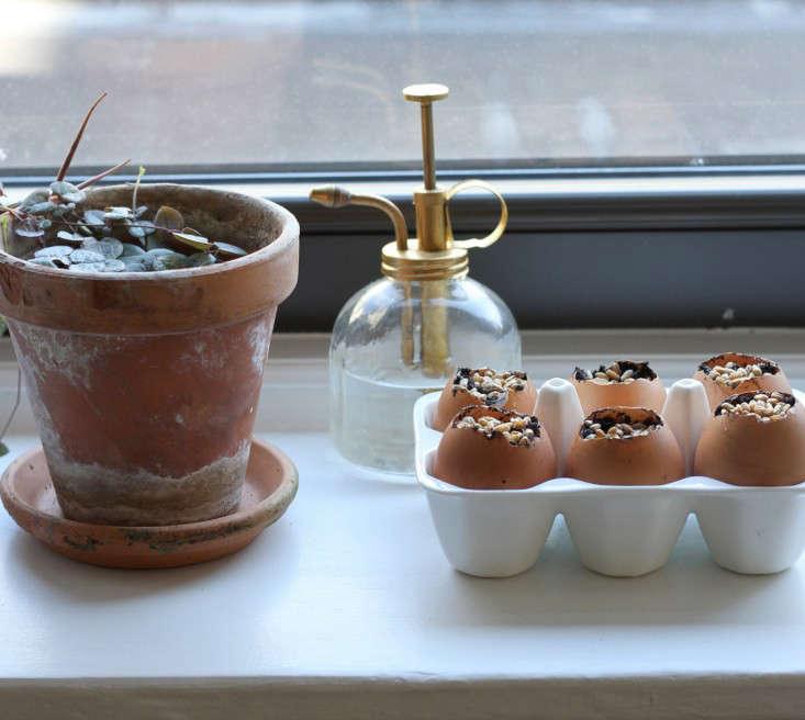 Eggshells make great seed-starting &#8
