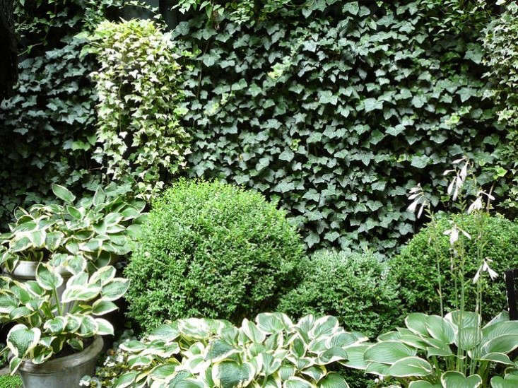 """This white and green garden by Sawyer   Berson includes hostas with variegated leaves, clipped boxwood shrubs, ivies, ferns, clematis vines, and annuals to add seasonal color. Photograph courtesy of Sawyer   Berson, from Landscape Architect Visit: """"Sex and the City"""" Meets Edith Wharton in Manhattan."""