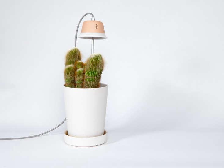 Cynara-grow-lights-Bulbo%20Italy-LED-gardenista%2012
