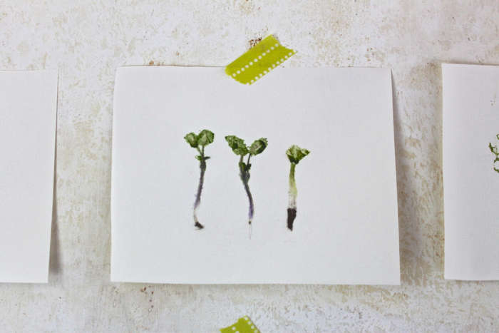 Botanical prints made with leaves, flowers, paper, tape, a hammer, and a work surface that you don't mind getting banged up. Learn how in DIY: Easy Art Leaf Prints. Photograph by Justine Hand.