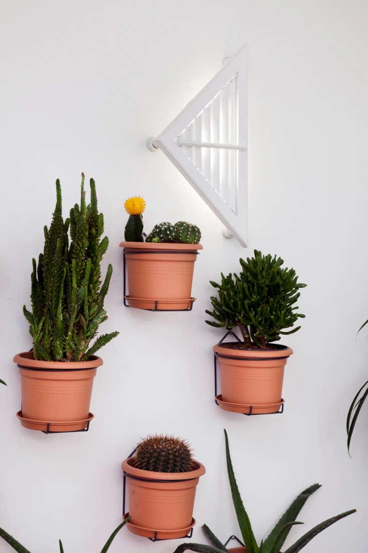 Cacti at Dezeen's headquarters