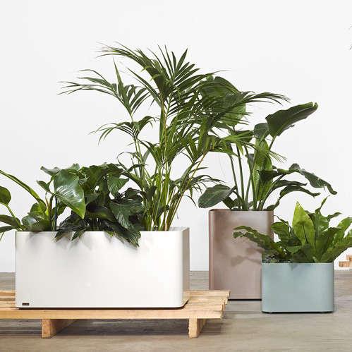 Tait-Planter