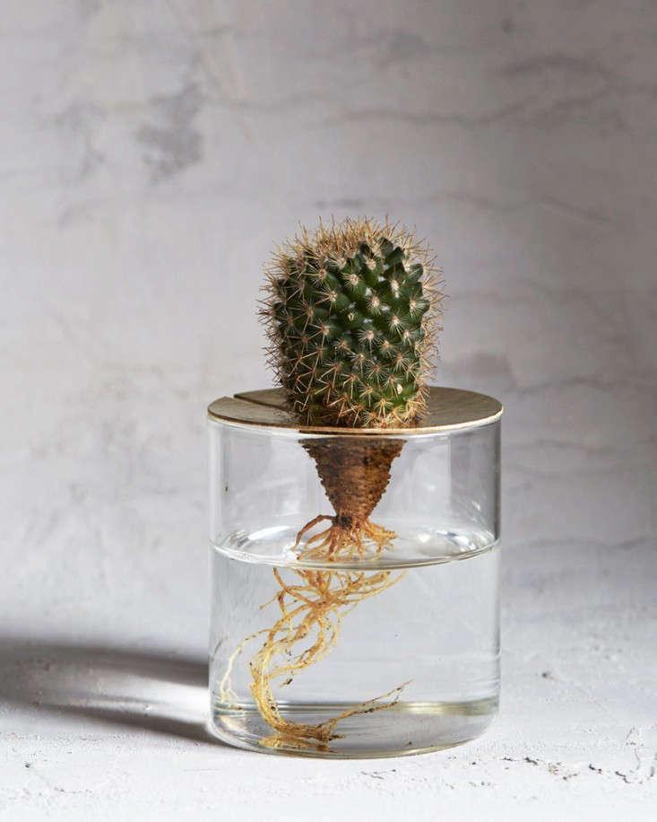 brass-lidded-terrarim-gardenista-1-3_0
