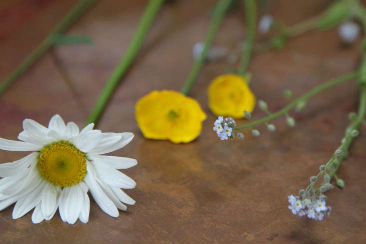 daisy%20buttercups%20forgetmeknow