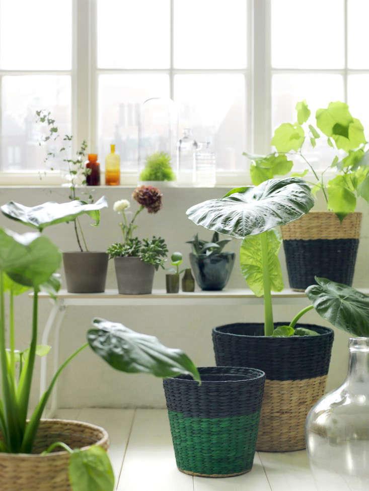 ikea-nipprig-woven-furniture-planter-baskets-gardenista.
