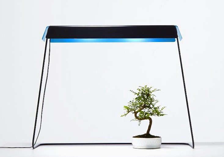 kusamono_grow-light-gardenista