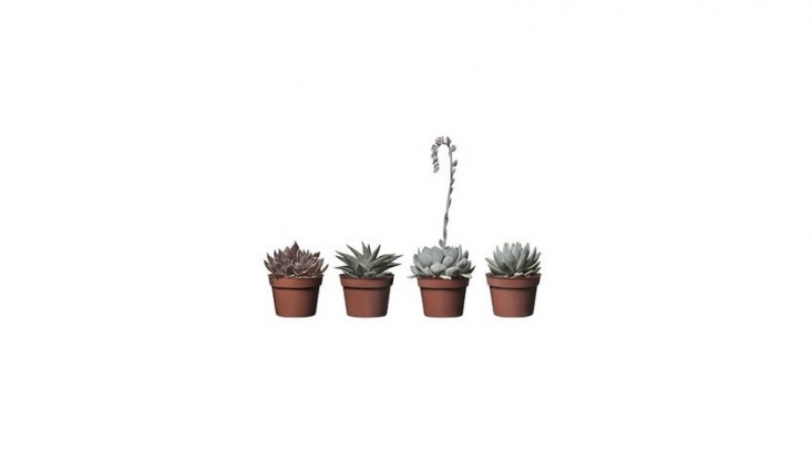 Ikea potted succulents