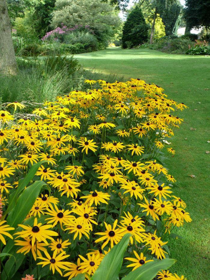 beth-chatto-garden-rudbeckia-yellow-gardenista