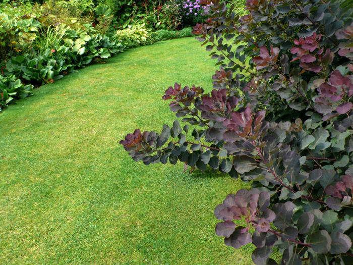 beth-chatto-garden-smoke-bush-1-gardenista