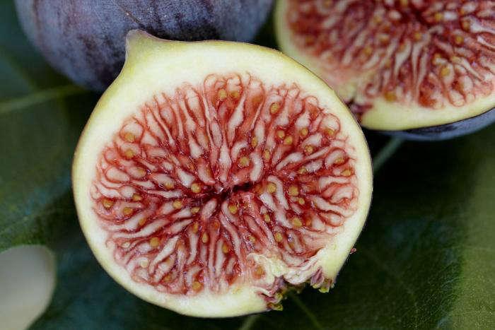 700_figs-7
