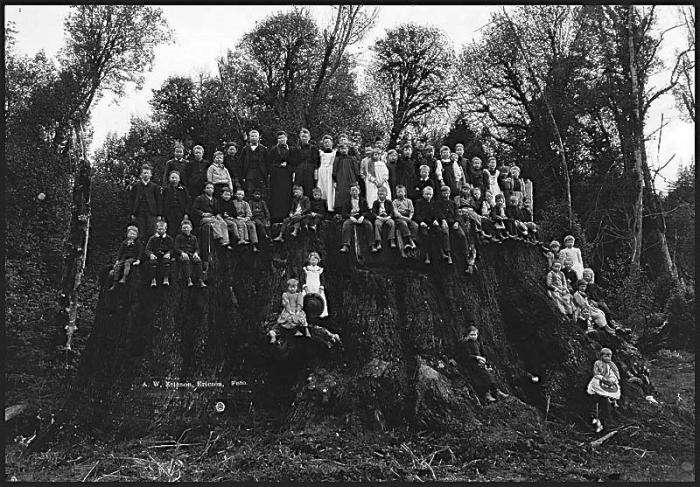 700_ancient-tree-fieldbrook-stump