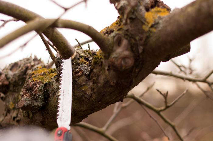 &#8\2\20;If you live in a zone where you already see thattrees and shrubs have buds swelling, you want to get the pruning done before they do leaf out,&#8\2\2\1; says Pierson. &#8\2\20;It&#8\2\17;s also a good time to move or remove plants that just didn't do well, for instance if you tried to grow a full-sun thing and it's not in full sun anymore.&#8\2\2\1;