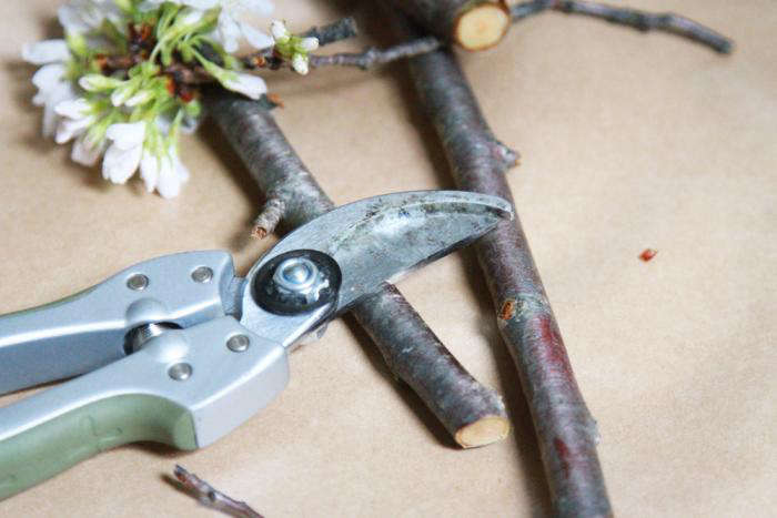 700_cherry-branches-and-pruner