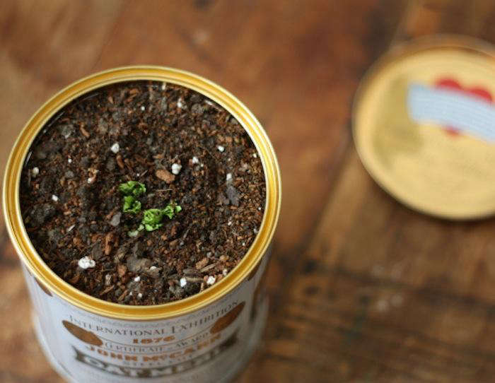 After about a week in the water bowl, transfer the root to a pot filled with mulch and potting soil for proper drainage.
