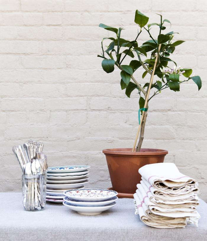 A potted Meyer lemon tree. Photograph by Nicole Franzen for Gardenista.
