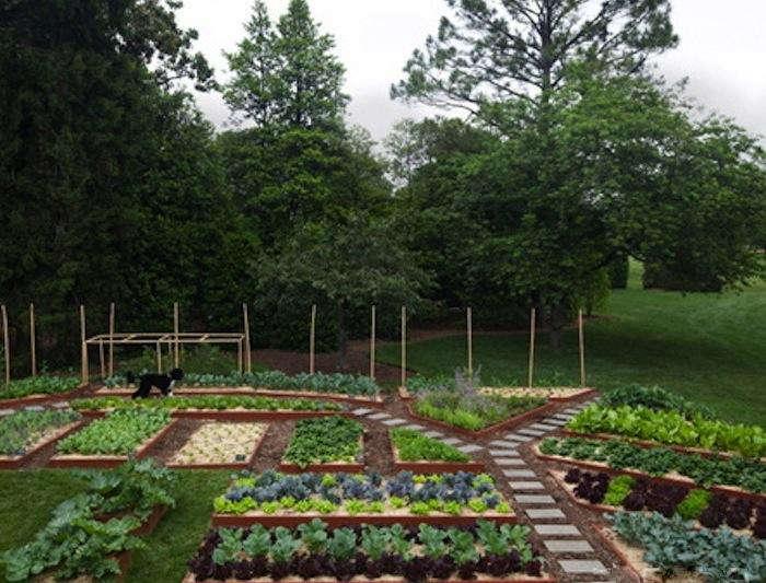 700_michelle-garden-bo-running