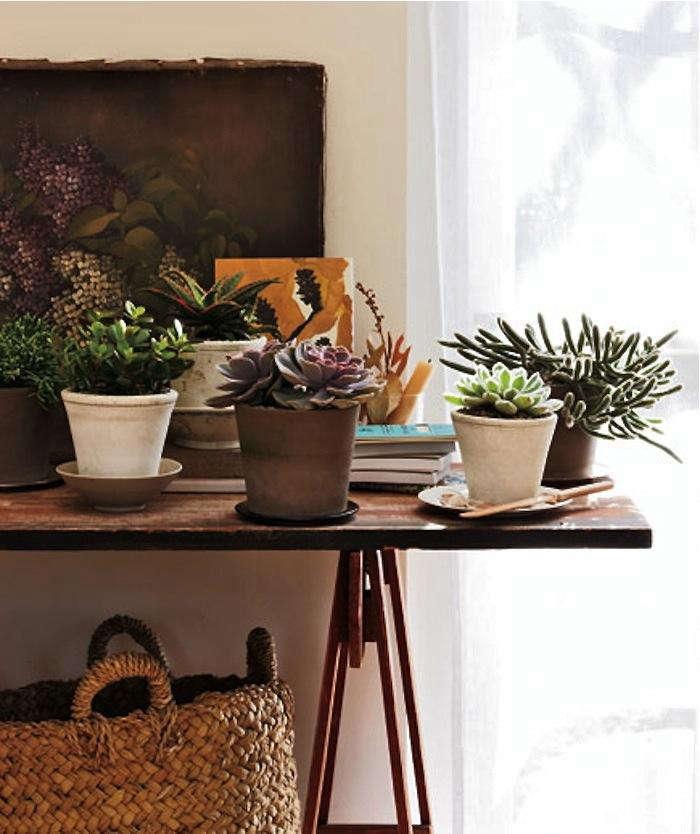 easy to grow houseplants succulents