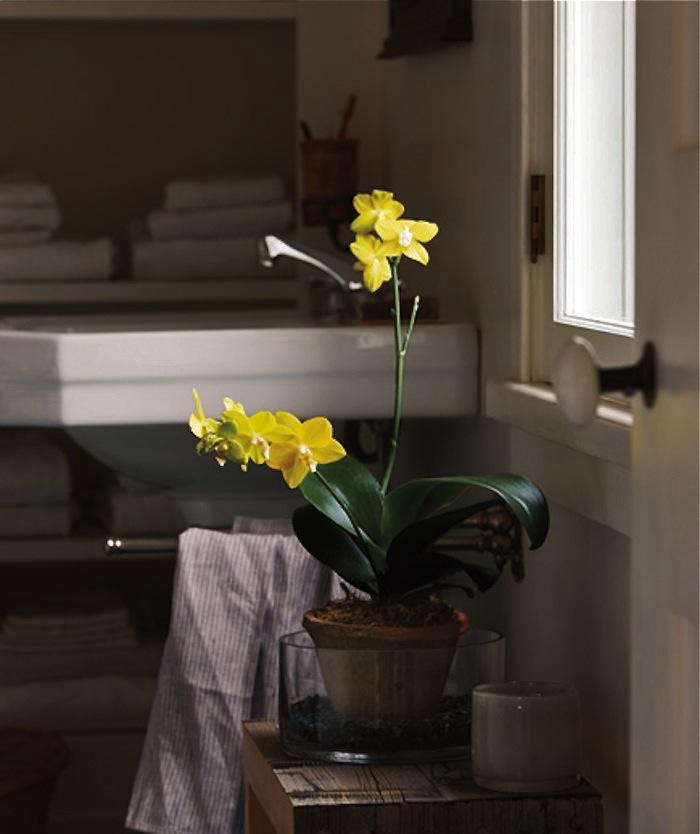 easy to grow houseplants low light orchids