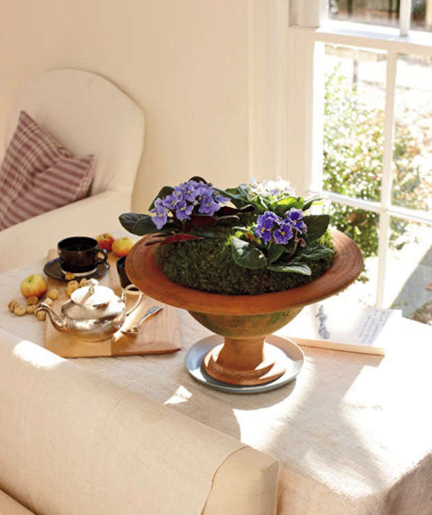 easy to grow houseplants african violets