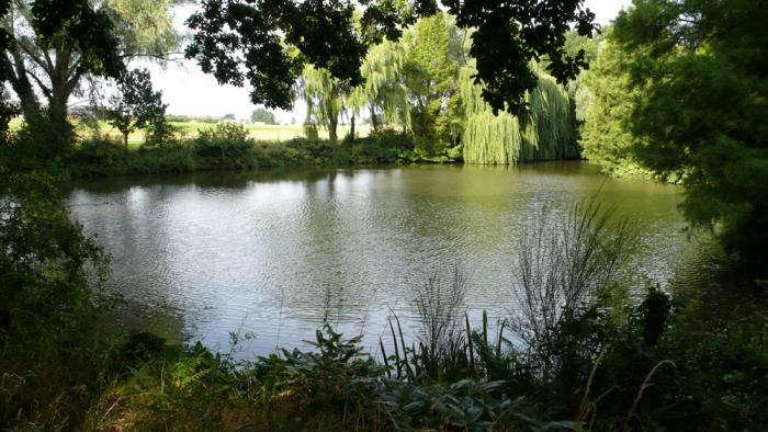 beth-chatto-garden-lake-gardenista