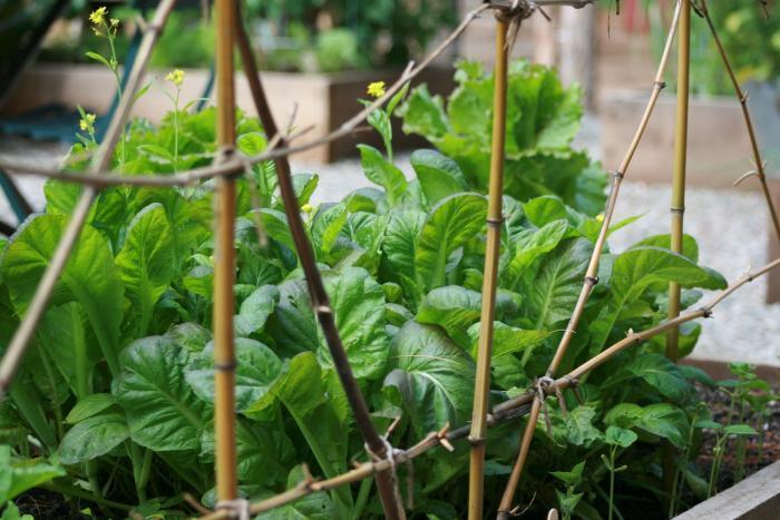 700_700-gardenista-edible-garden-096