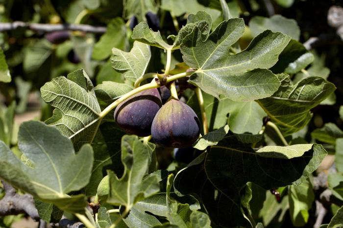 700_figs-9