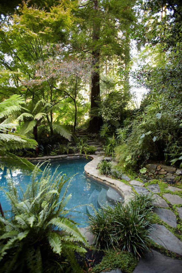 Tropical foliage surrounds the swimming pool.