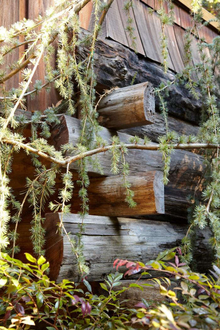 A weeping cedar grows against the house. The one-acre private garden is on the largest lot in downtown Mill Valley. The original owner, a congregational minister, dubbed the property &#8\2\20;Crown Point,&#8\2\2\1; a name the Schatzes still use.