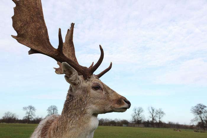 700_mistle-antlers
