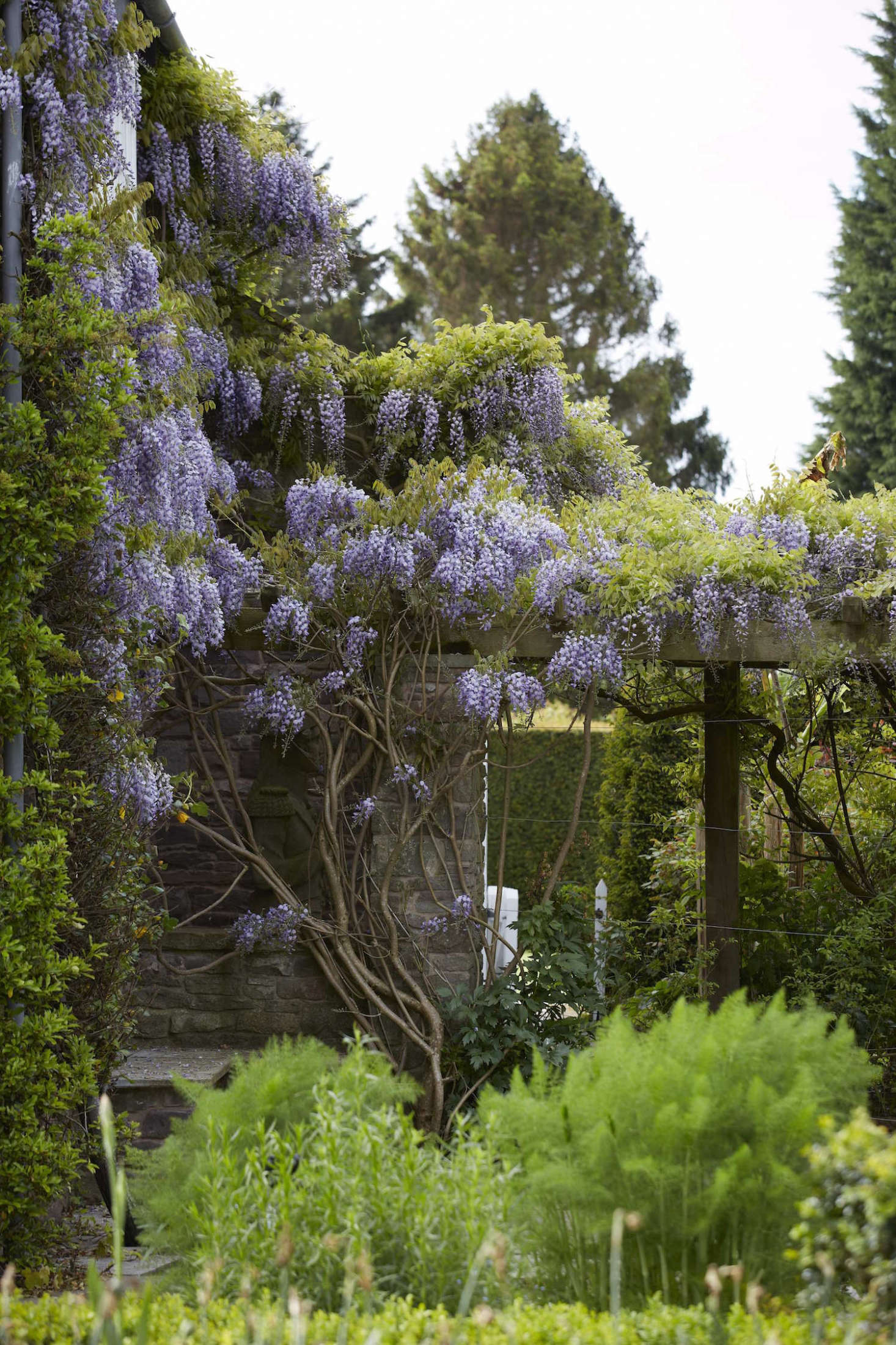 Prune wisteria twice a season: in early March before it blooms and again in late summer to remove what Macunovich refers to as &#8