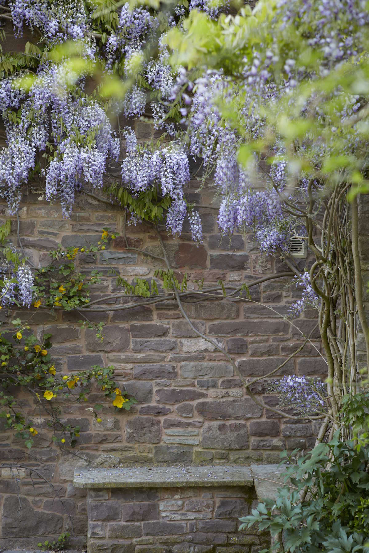 Whether you want a tree or a vine, you should prune wisteria each year to encourage it to bloom. And be patient: it can take two or three years of pruning to prompt it to bloom.