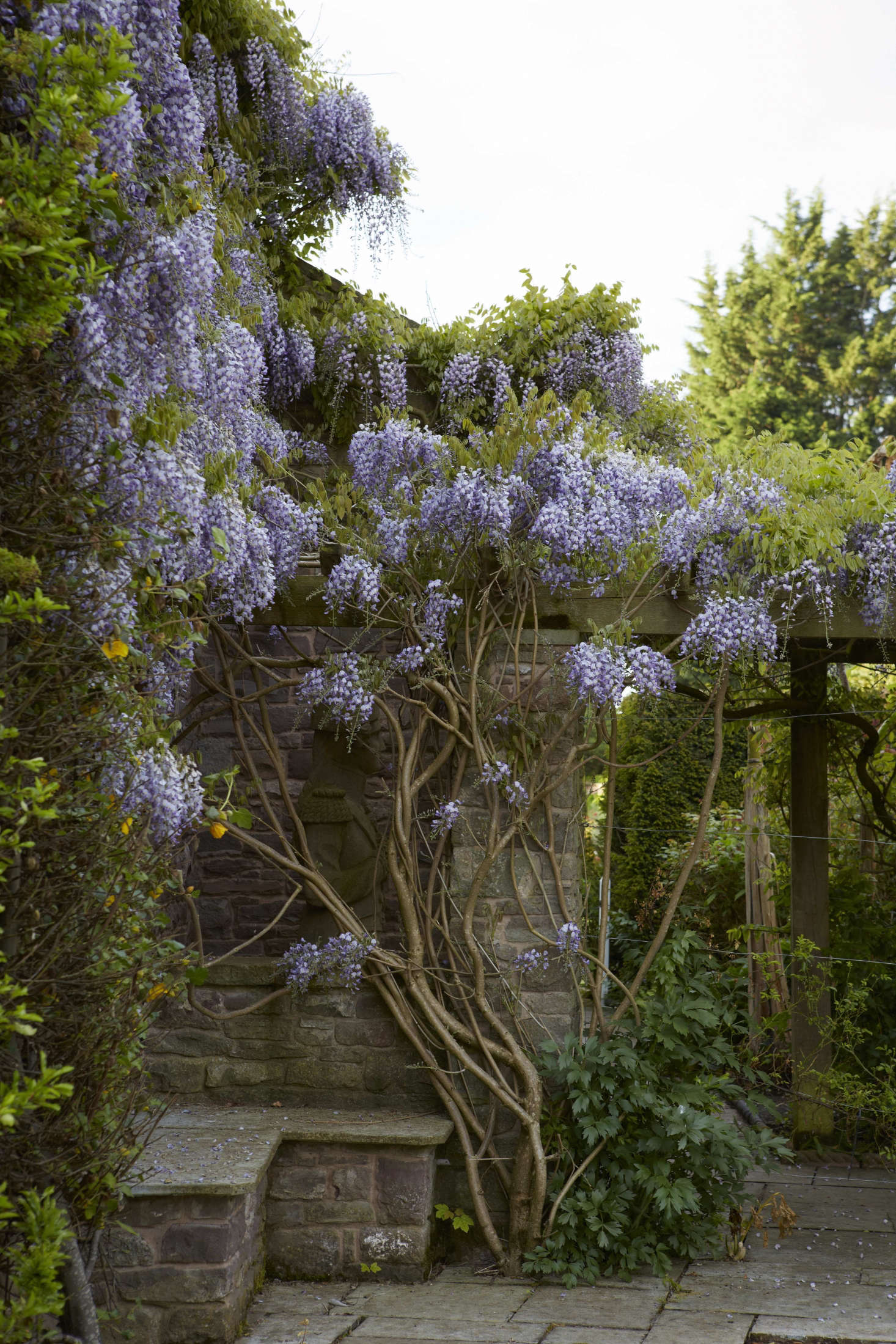 Plant wisteria in a protected, warm spot in full sunlight (try to get this right the first time, because it does not like to be transplanted).