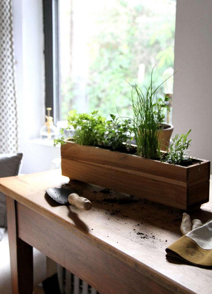 Urban Gardening Shade Tolerant Herbs To Grow In Your Apartment Gardenista