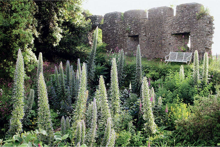 Spires of echiums, an idea borrowed from Australian gardens, pierce the foreground in front of Isabel and Julian Bannerman&#8\2\17;s Cornish castle walls. Photograph by Isabel Bannerman and Dunstan Baker. For more, see Required Reading: Landscape of Dreams.