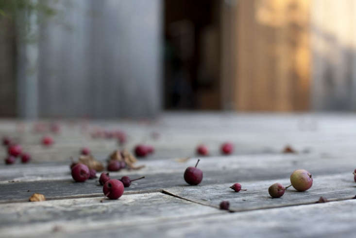 crabapples on wooden deck onix architects