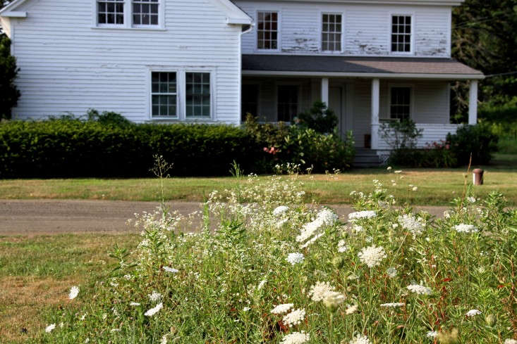 Queen Anne's Lace meadow by Erin Boyle