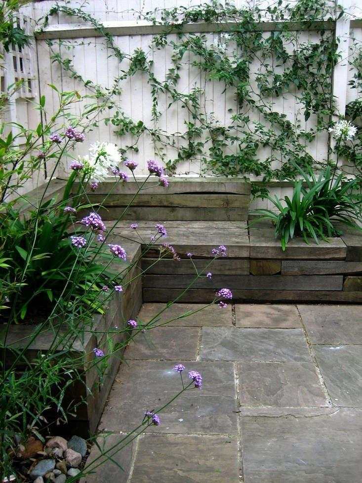 Verbena courtesy of Anna Wardrop London garden