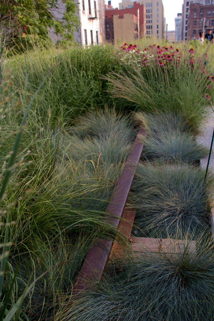 high-line-new-york-city-grasses-railroad-tracks-mike-peel-wikimedia