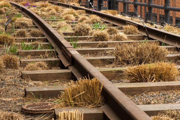 Clumps of grasses, shorn, on the High Line in New York City. Photograph by Frank Schulenberg via Wikimedia. See more in  Garden Ideas to Steal from the High Line in NYC.