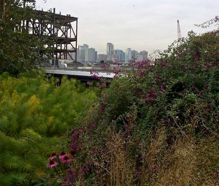 high-line-park-echinacea-skyline-jeanne-rostaing