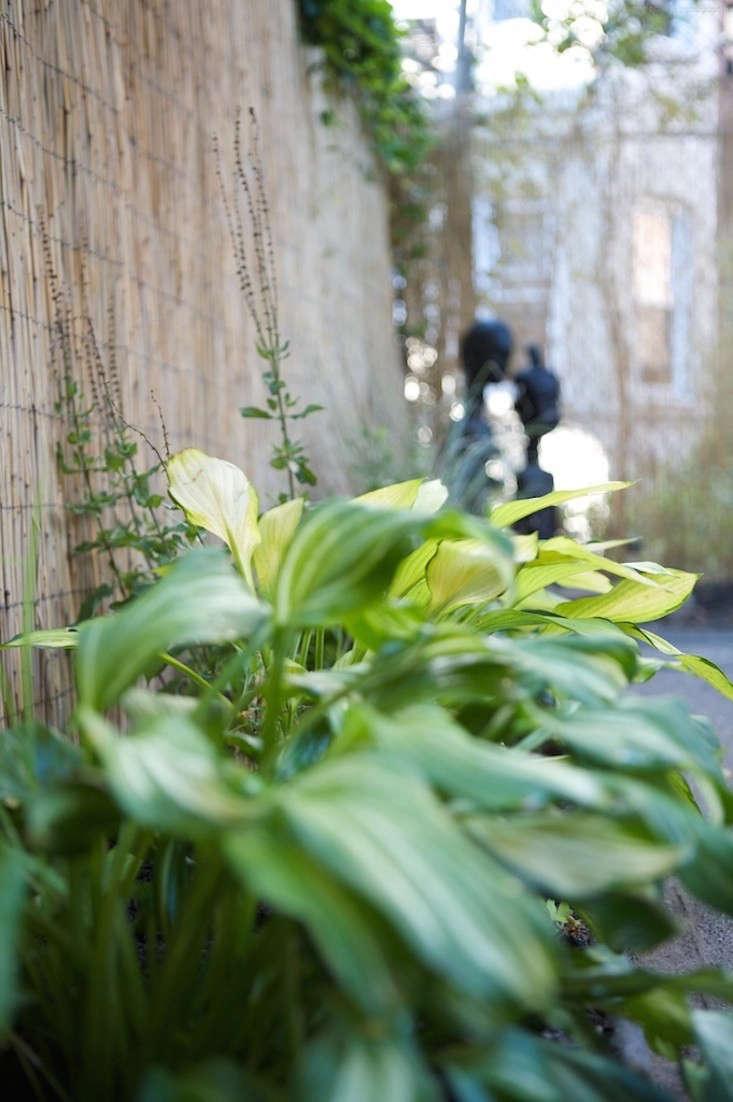 hosta-bamboo-fence-ishka-designs-brooklyn-gardenista