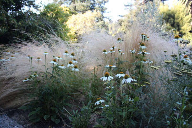A pairing of Echinacea Purpurea 'White Swan' ($loading=