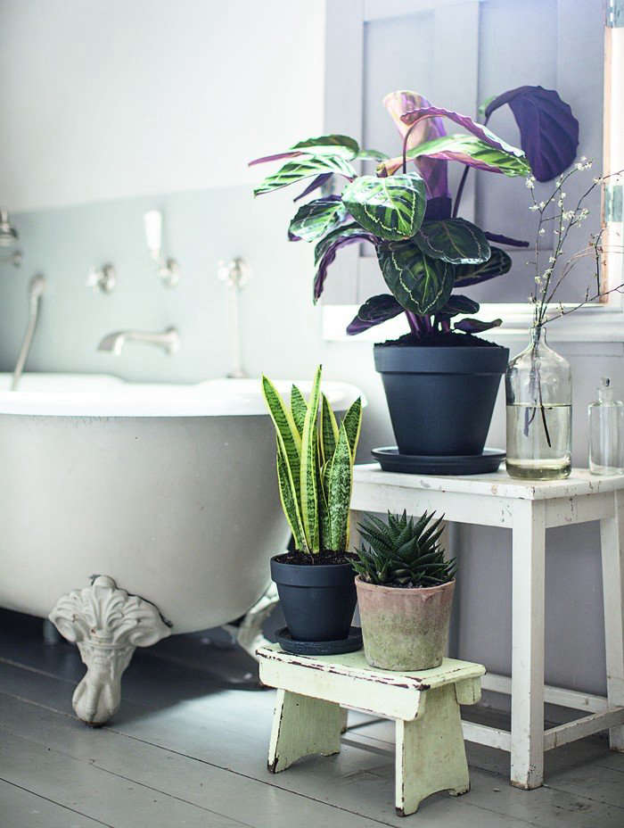 UK-based garden designer Isabelle Palmer has a potted Sansevieria in the bath, where it enjoys higher levels of humidity. For more, see Required Reading: The House Gardener. Photograph by Helen Cathcart.